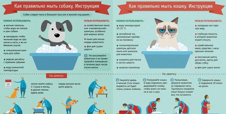 инструкция инфографика